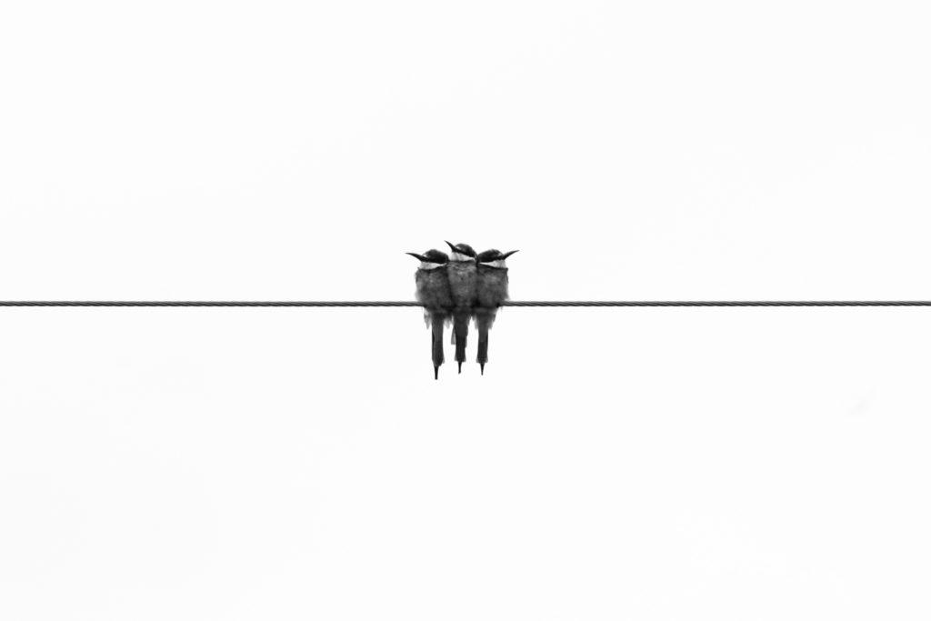 why minimalism is popular